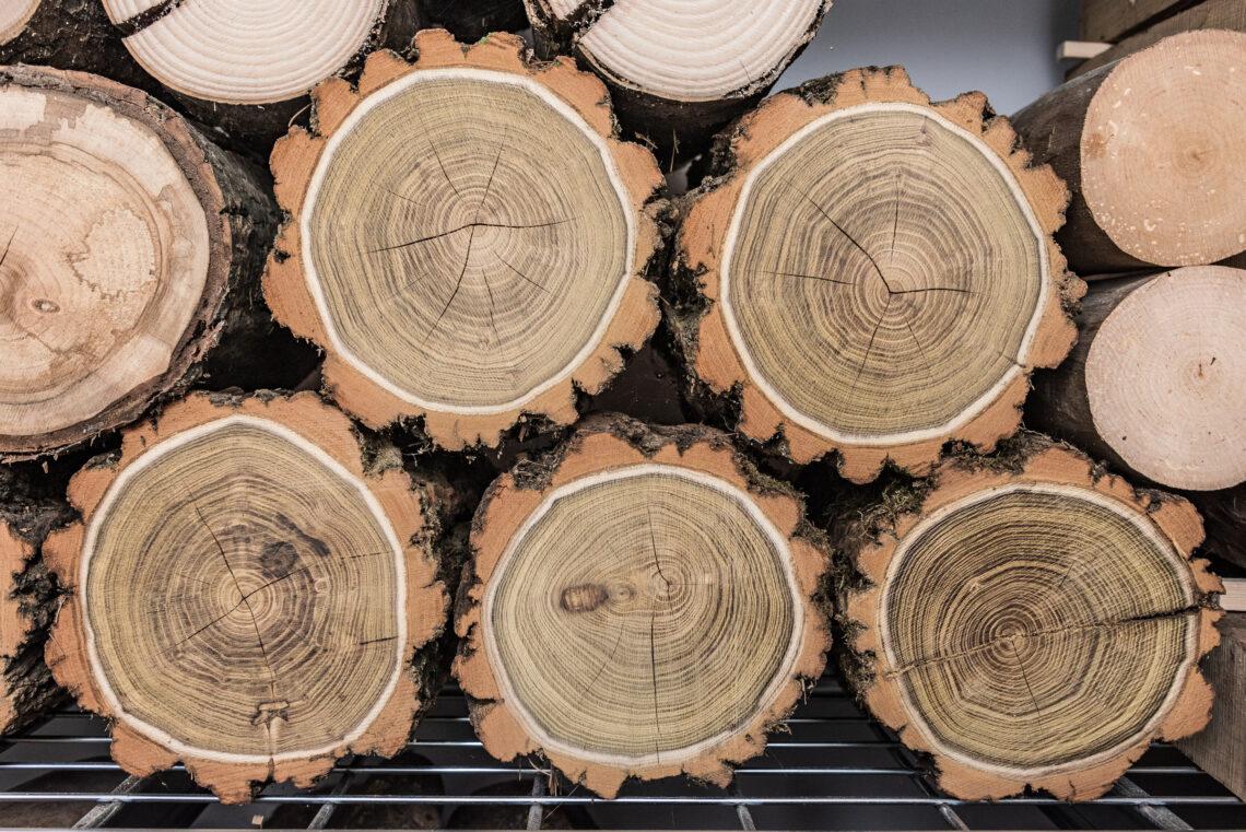 Toczenie drewna grochodrzew
